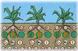 Funciones de los macronutrientes y micronutrientes en el suelo