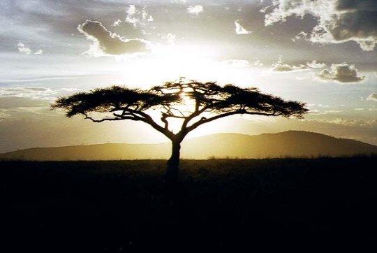 http://1.bp.blogspot.com/_g_Ot5xfXrvQ/RwYmxPgsn6I/AAAAAAAAAAY/GZhtCkHCFTg/S660/paysage+d%27afrique.jpg
