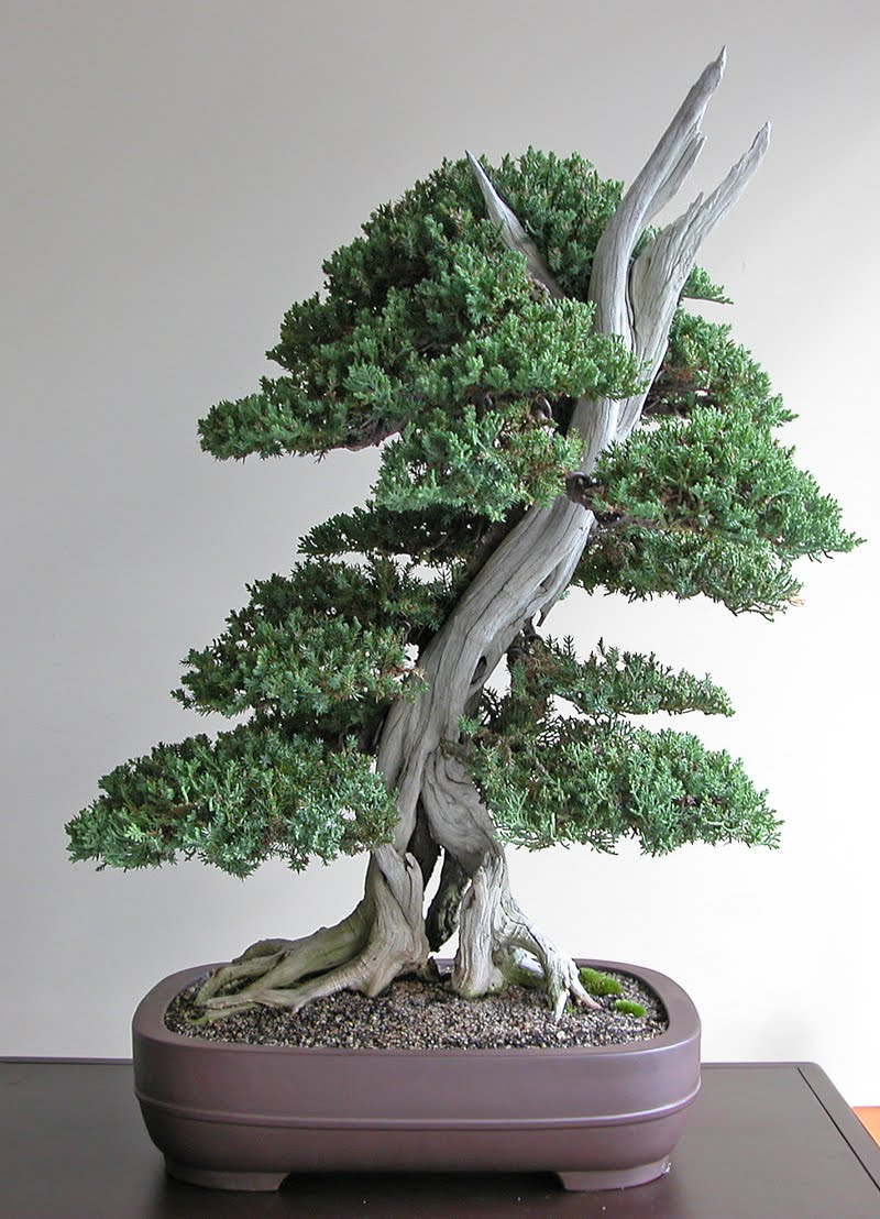 Reading Lovers Basic Information And Care Of Bonsai