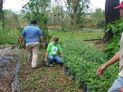 Preparandonos para Reforestaciones 2009