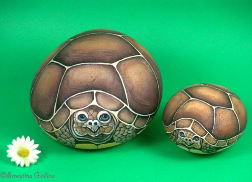 Sassi a p arte tartarughe for Sassi per tartarughe