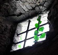 سدوا علي النور في زنزانة,, فتوهجت في الأرض شمس مشاعري