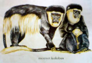 Dan afrika jenis jenis monyet ada beragam tetapi ciri yang menonjol