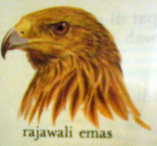 bentuk paruh yang dimiliki burung di sesuaikan dengan m