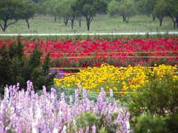 wild seed farm fredricksburg