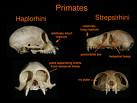 Ape Classification And Evolution | RM.
