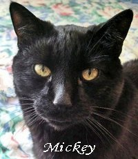 """Angel""  Mickey-Blog Founder"
