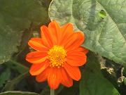 I LOVE THIS FLOWER...