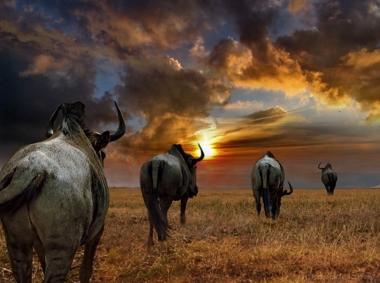 http://1.bp.blogspot.com/_gfXupHOEhH0/S-Hel31kyXI/AAAAAAAAQ4k/1uM8nhzhfCE/s1600/beautiful_africa_photos03.jpg