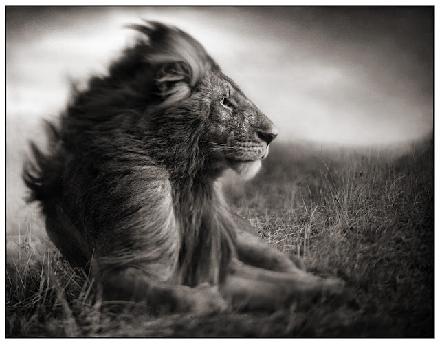 Creative Nature Photography by Nick Brandt Seen On www.coolpicturegallery.net