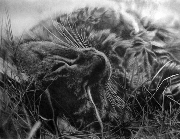 Cat Pencil Drawings by Paul Lung Seen On www.coolpicturegallery.net