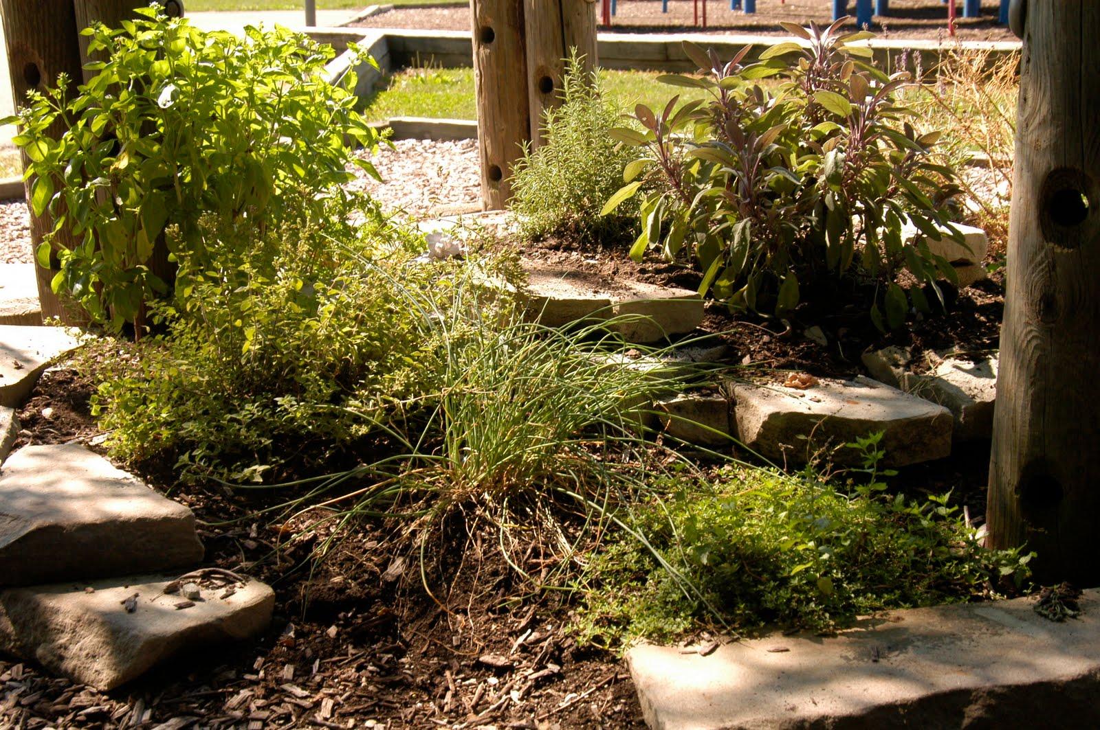Prospect Learning Garden: herb spiral