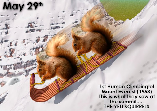 Yetti Squirrels