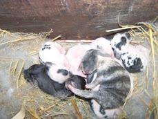 Anak kelinci umur 3 hari