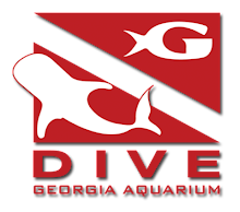 Click for Dive Immersion Program