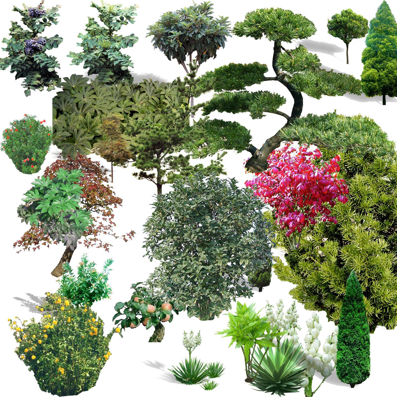 TREE%20PSD%2003.jpg