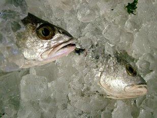 O peixe certamente que pode ser congelado e marisco fresco congela bem.