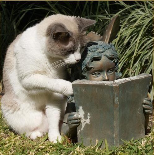 [smart-cat-834.jpg]