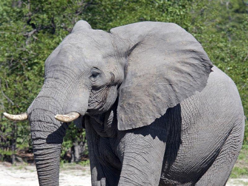[elefante-fondos-pantalla.jpg]