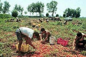l'italiano non raccoglie i pomodori perchè non è dignitoso o conveniente