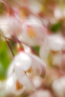 Spring blossoms - beautiful flowers ( photoforu.blogspot.com )