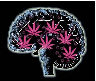 El efecto de la marihuana