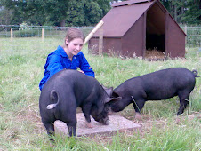 "This is the story of 2 free range, rare breed, berkshire pigs and their ""Pet"" Emma"