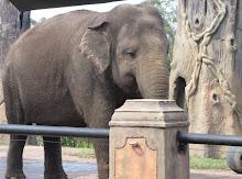 The precious Elephant.