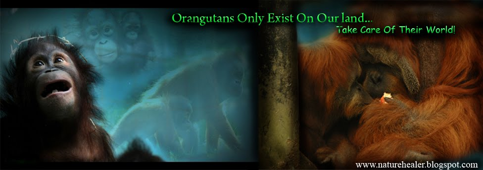 Save the Orangutans - You Are Their Hope!