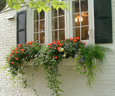 Windowbox by Molly H. Jordan, Richmond, Va.