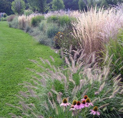 Know your grass gardener 39 s journal for Tall grass border