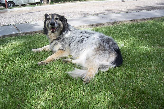 LULA, la perra maravilla