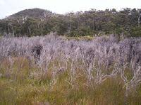 Burnt vegetation, Blowhole Valley, Tasmania - 2006