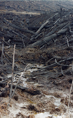 Forest felled and burnt across watercourse, Southern Forests