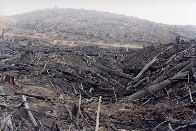 Clearfelled hillside, Southern Forests