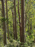 Forest below East-West Firetrail, Collins Bonnet Track - 11 May 2007