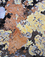 Lichen on Dolerite - 25 Oct 2007