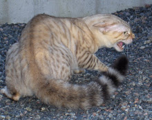 Pimp vår katt :)