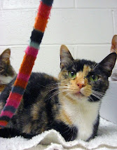 Tiger Ranch Cats Up For Adoption Here!