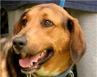 Ike~Male Shepherd Mix~Rescued 8-20-10~ Newport, TN~ Adopt A Dog On Death Row!!