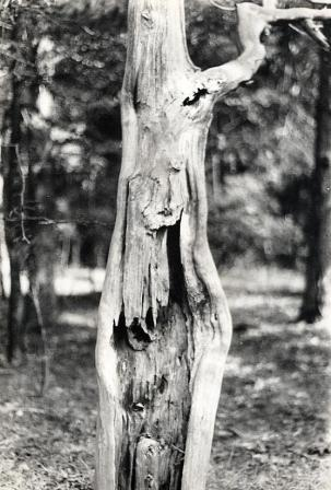 Photo:  Tree Man