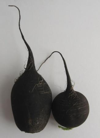 Photo: Black Turnip
