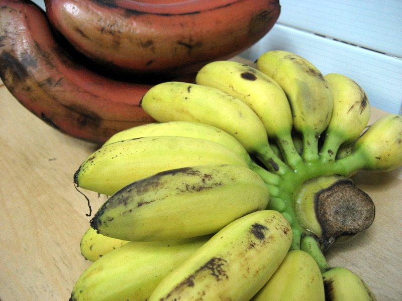 Photo of pisang mas bananas and red bananas