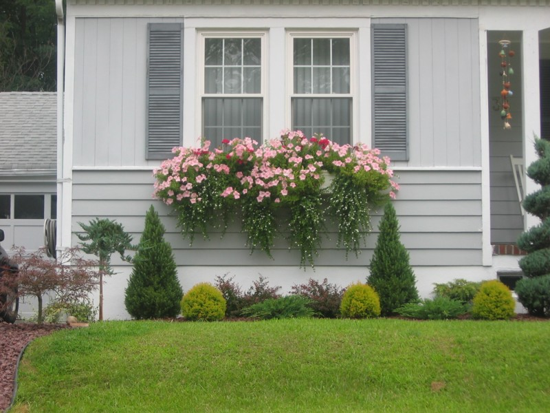 How to plant a rockin 39 window box the impatient gardener for What to put in front of a bay window
