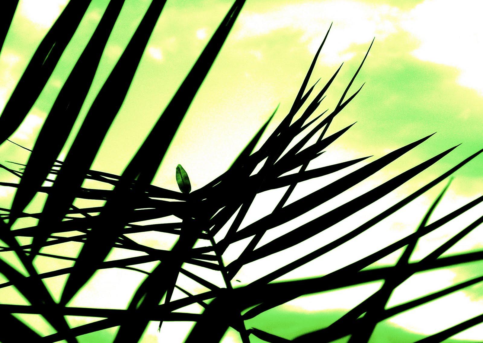 Nikos palm passion sunday prayer march 28 for Prayer palm plant