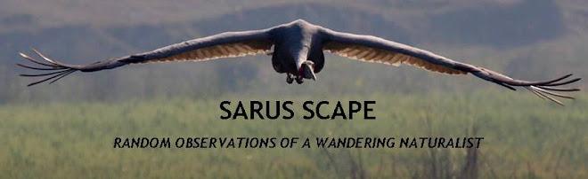 SARUS SCAPE