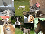 Visit our hobby farm blog