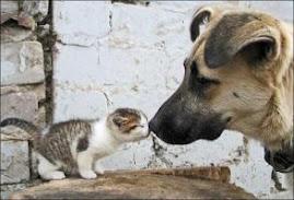 Kutya macska allergia