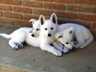 Filhote de cachorro 2