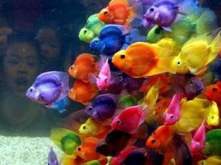 fotos de peixes3